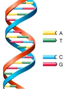 DNA bild2