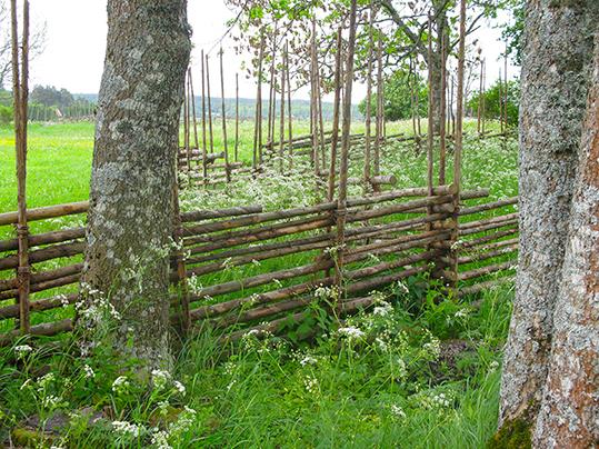 Gärdsgård L Hammarby