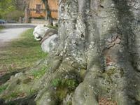 Arboretum 2 200