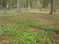 Arboretum 4 200